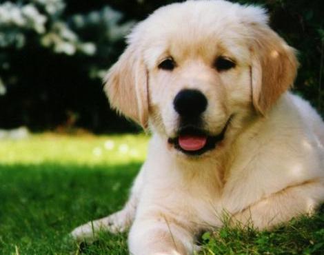 dog-information_14073114981