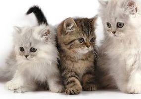 article-new-thumbnail-ehow-images-a05-2u-fe-cat-scratch-fever-signs-symptoms-800x800